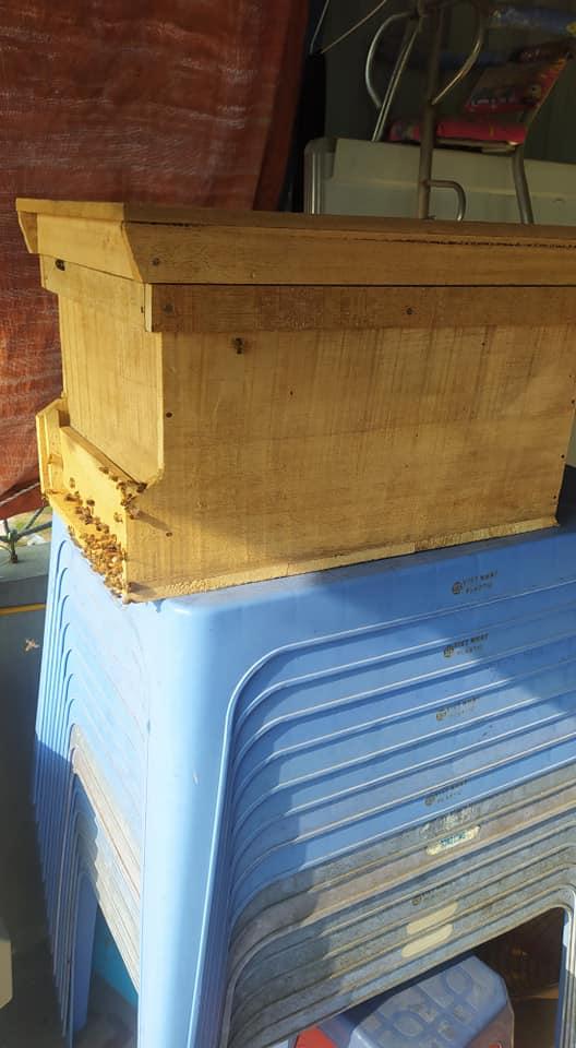 bee wooden hive