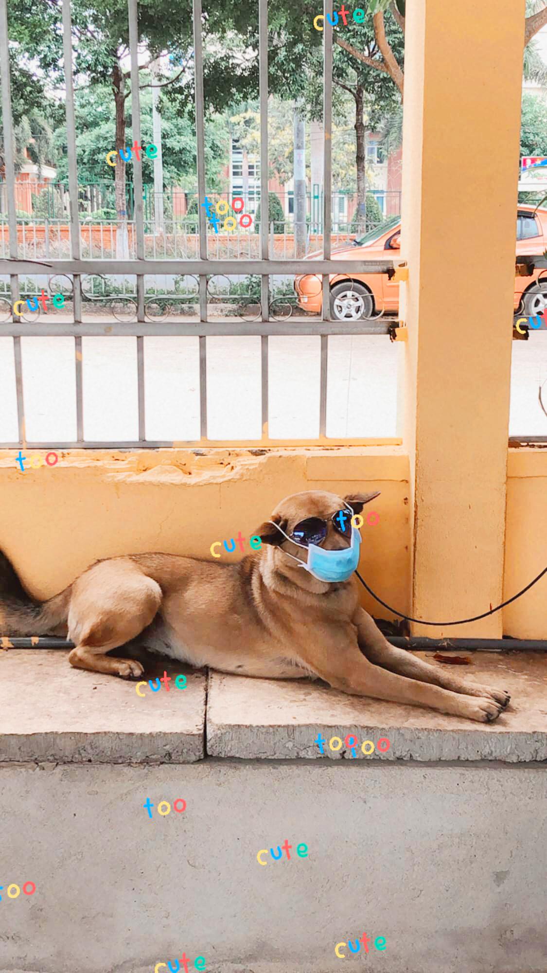 dog wearing mask
