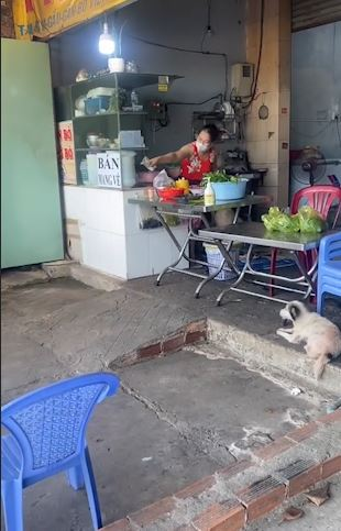 dog collects money