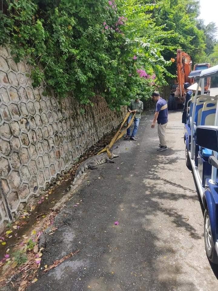 crocodile escapes 2