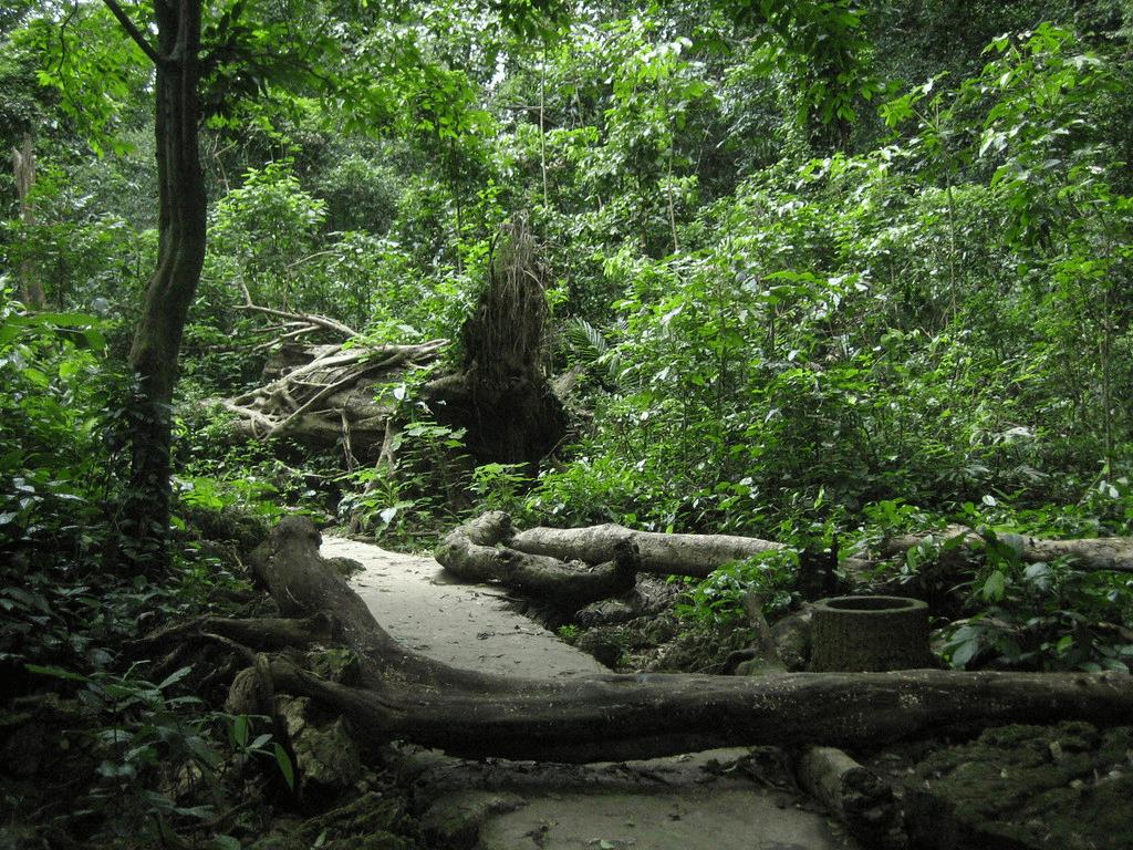 Nguyễn Văn Thái pangolin national park