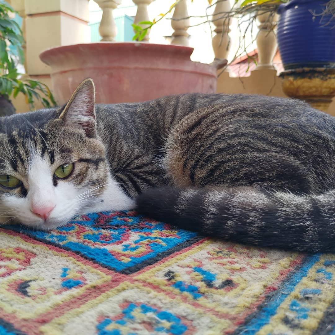Vietnamese superstitions - cats bring bad lụck