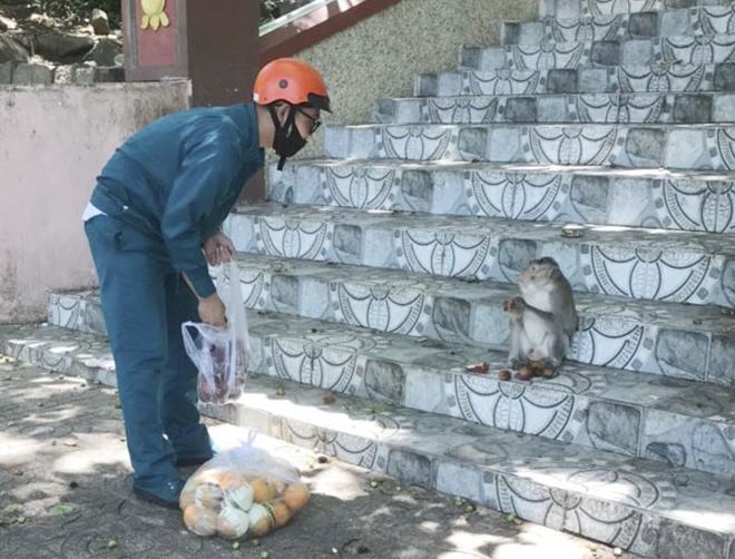 vung tau monkeys 4