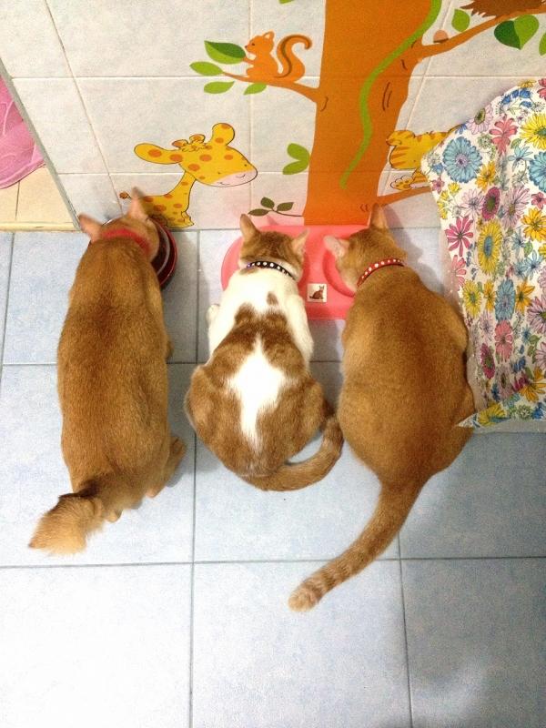 b2ap3_thumbnail_photo-2-2.JPG