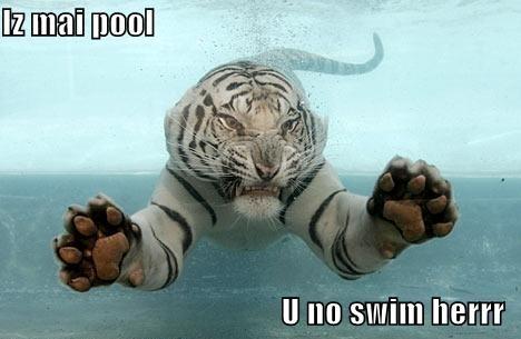 b2ap3_thumbnail_funny-pool.jpg