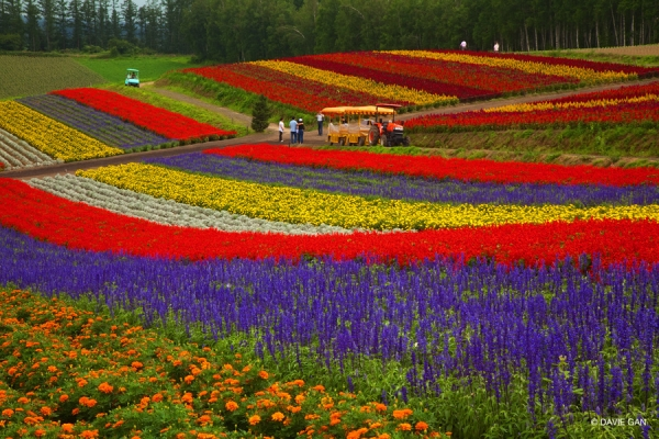 b2ap3_thumbnail_farm-tomita.jpg