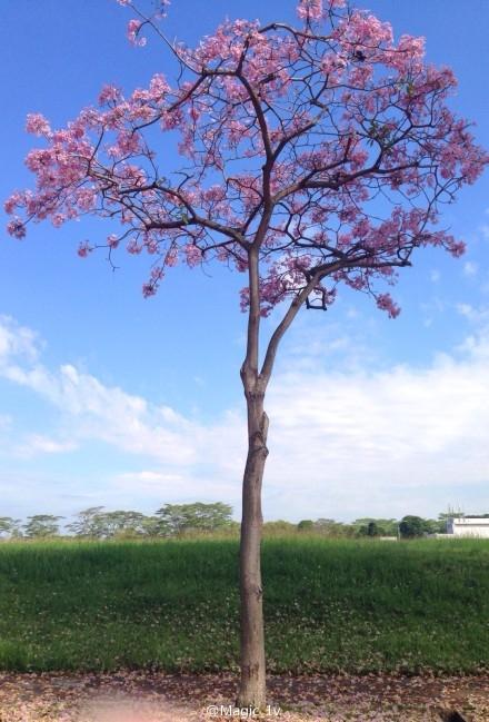 Transformed Tree