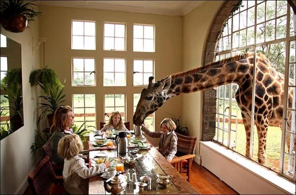 b2ap3_thumbnail_GiraffeManor1.jpeg