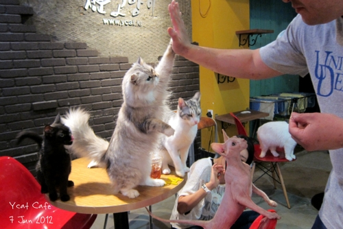 Cutest Cat Cafes
