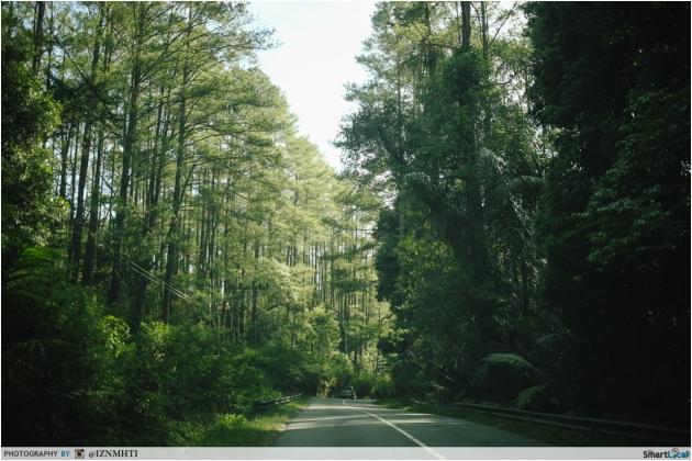 Medan Forests