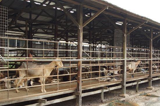 b2ap3_thumbnail_goat_farm.jpg