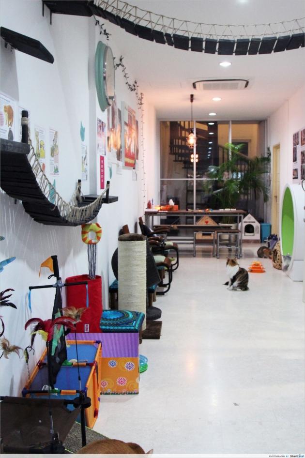 a1sx2_Thumbnail1_Lion-City-Cats-2.JPG