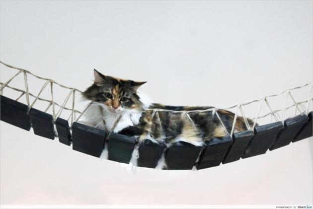 b2ap3_thumbnail_Lion-City-Cats-12.JPG