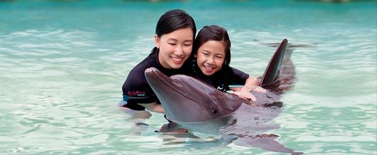 b2ap3_thumbnail__masthead01_dolphin-island.png