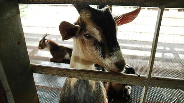b2ap3_thumbnail_0000_Hay-Dairies-1.jpg