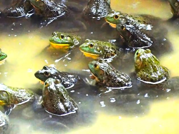 b2ap3_thumbnail_frog.jpg