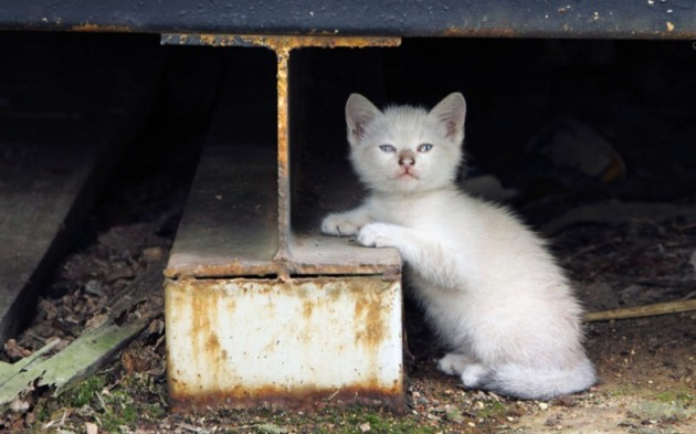 b2ap3_thumbnail_cat.jpg