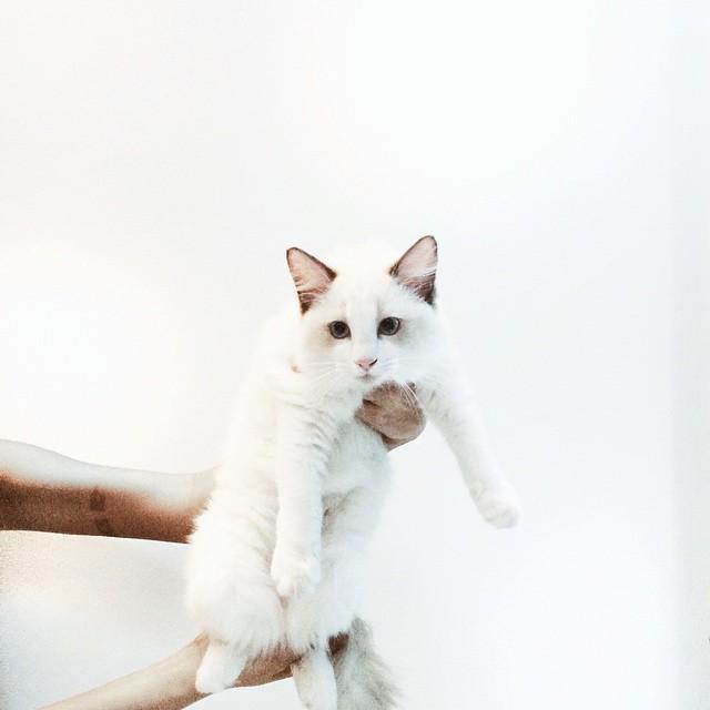 Pika-office-cat.jpg