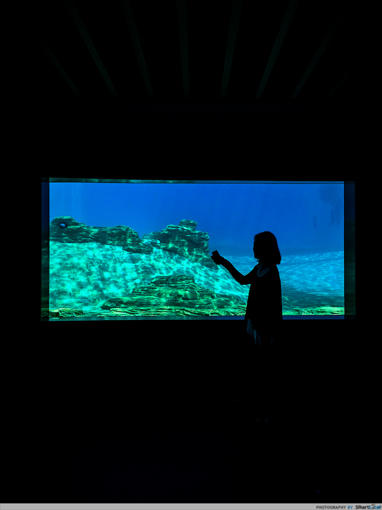 SEA-aquarium-RWS-14.jpg