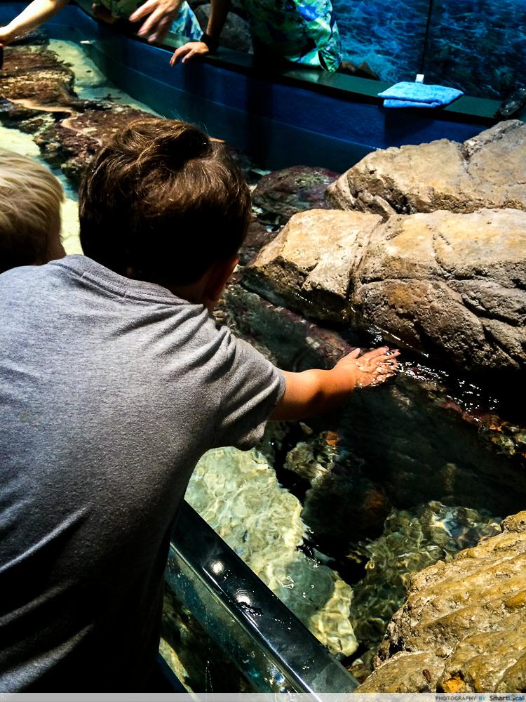 SEA-aquarium-RWS-15.jpg