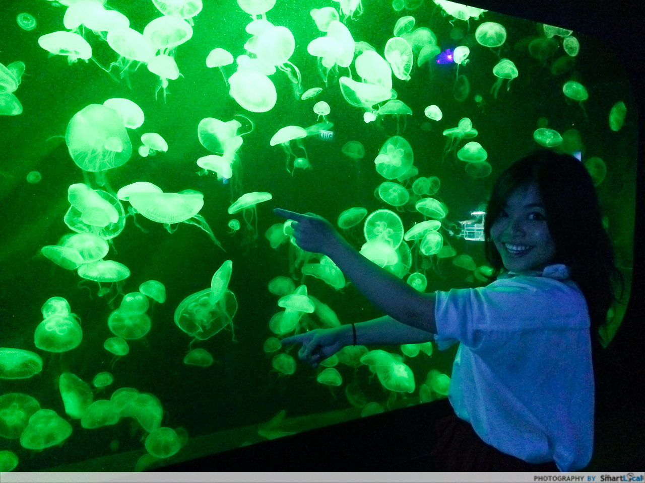 SEA-aquarium-RWS-9.jpg
