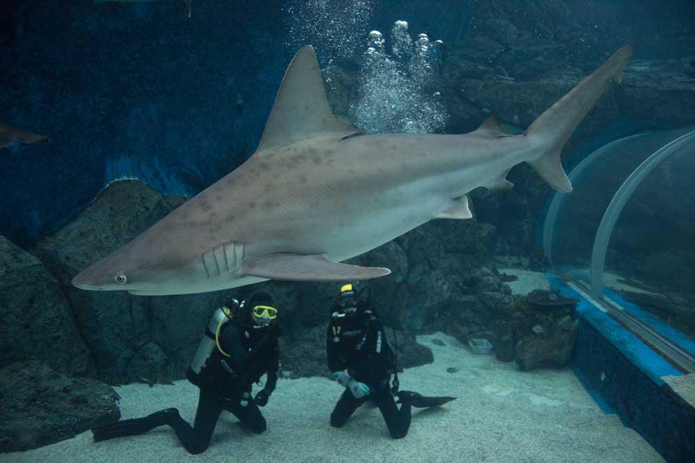 Shark-Dive.jpg