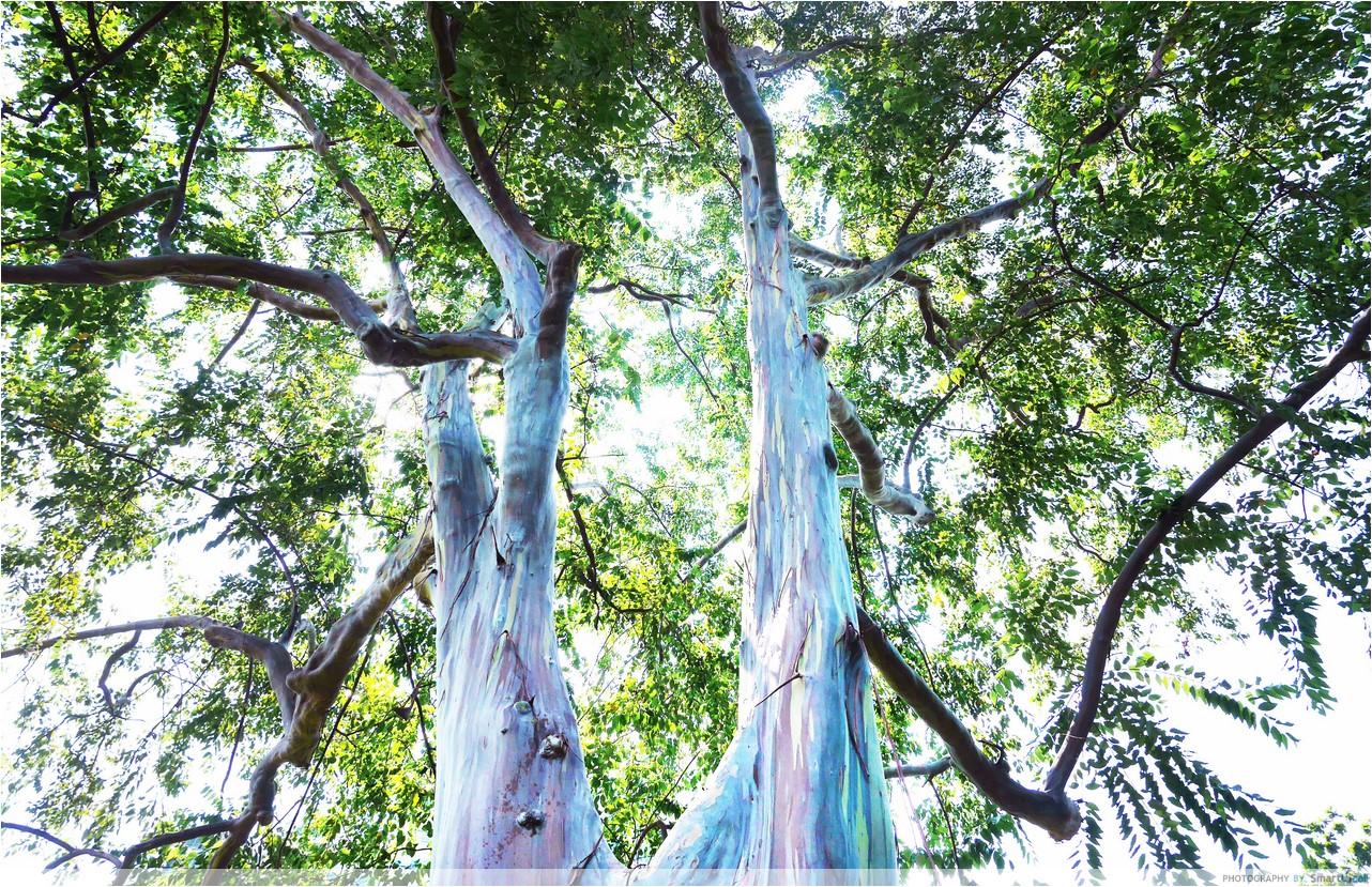 7-Katong-Tree-2-copy.jpg