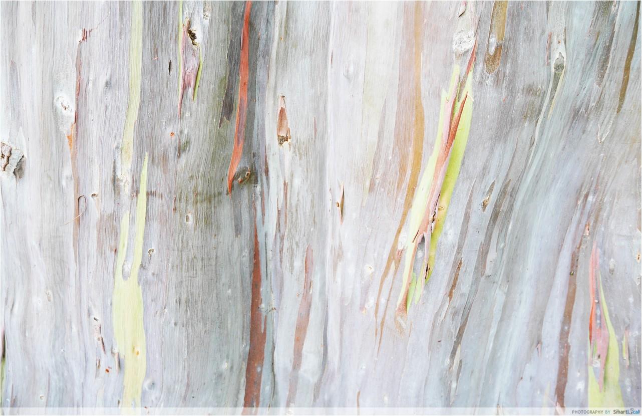 7-Katong-Tree-4-copy.jpg
