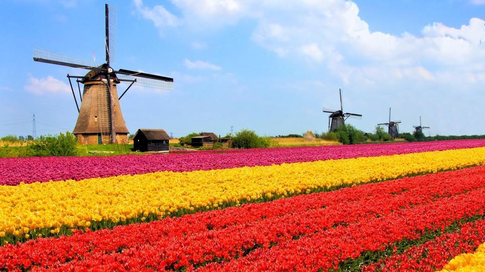 14.-Dutch.jpg
