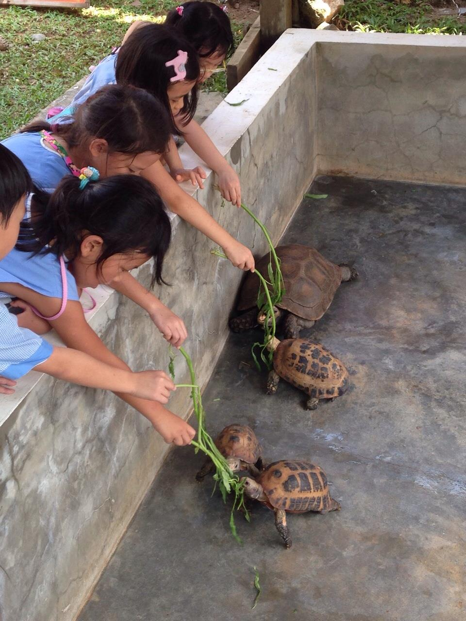 18.-Turtles.jpg