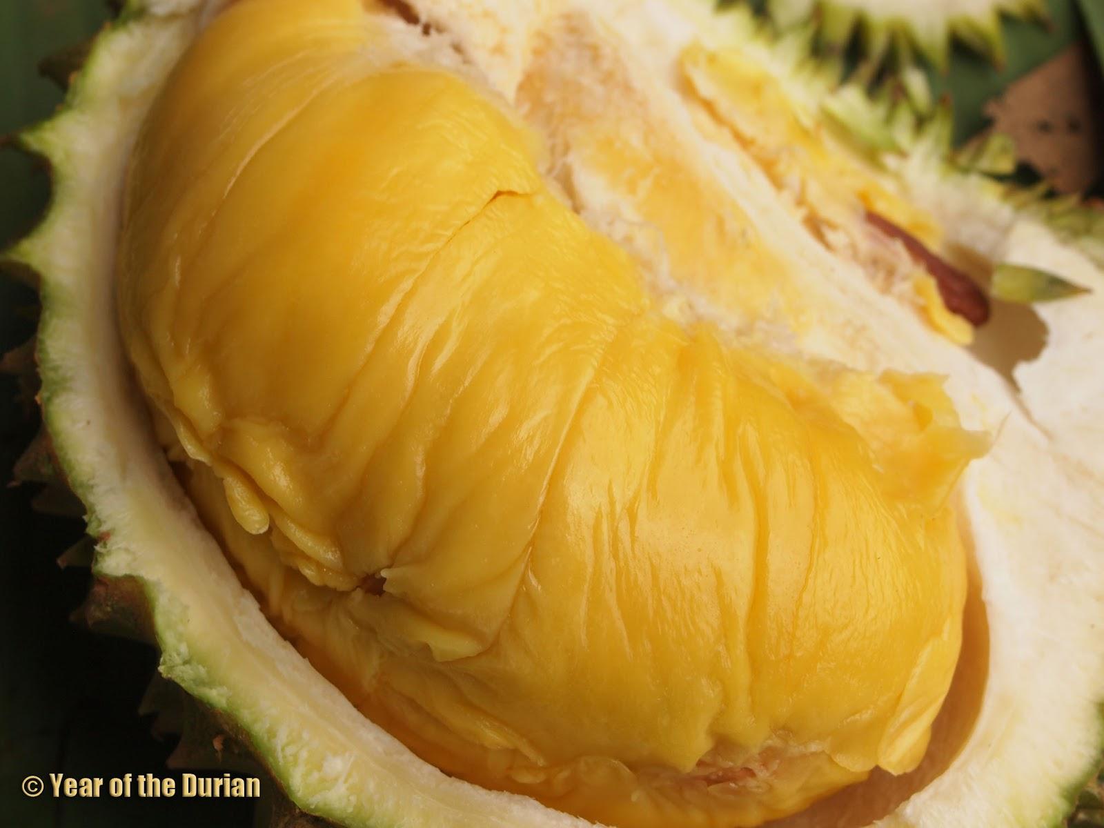 Durian_20150617-025116_1.jpg