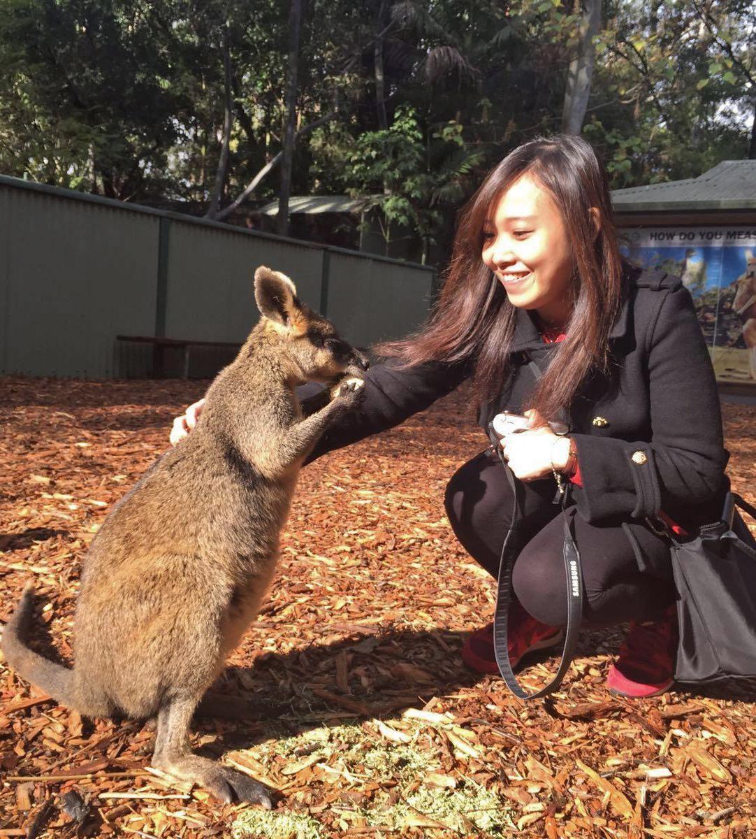 baby kangaroo sydney featherdale wildlife park jetabout