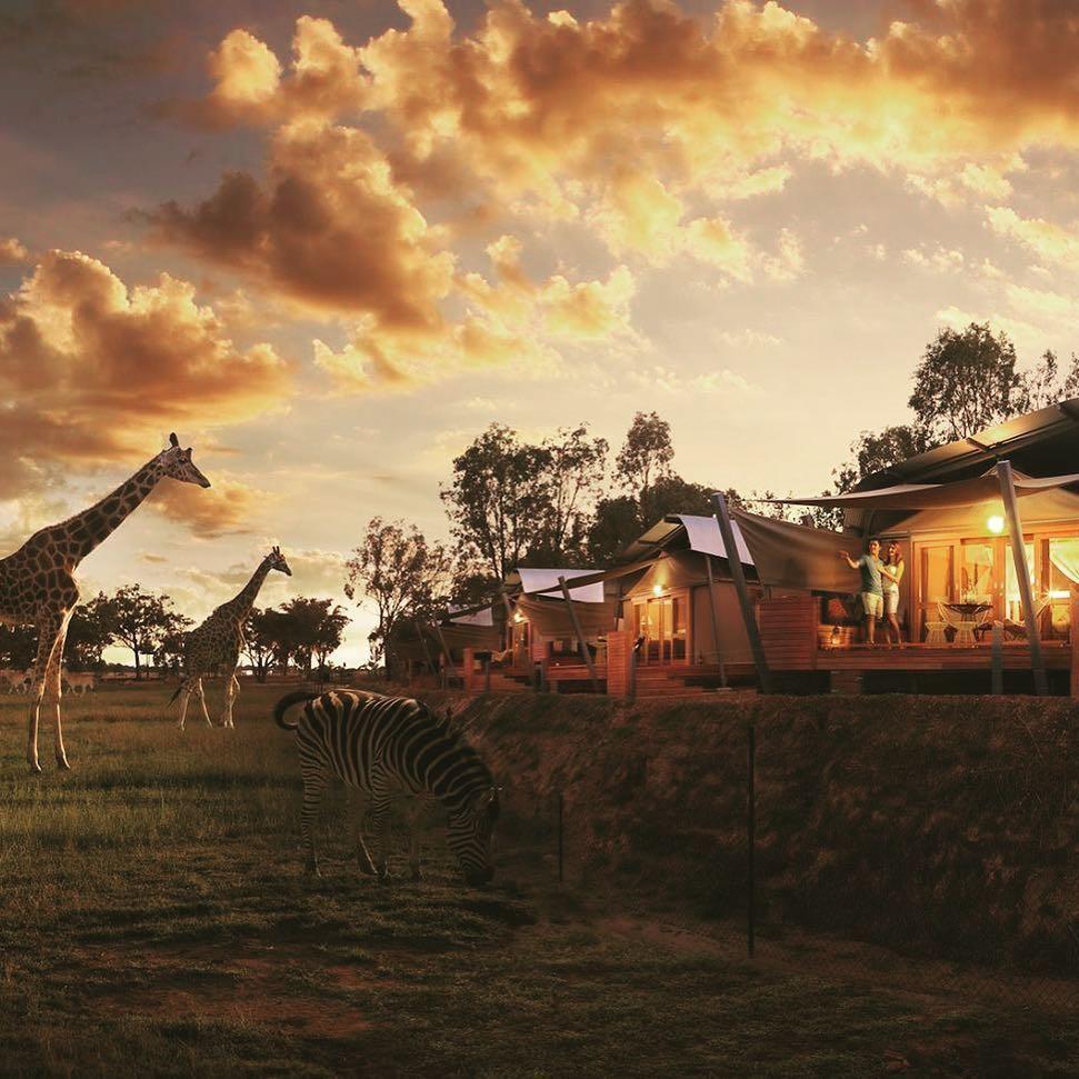 lion pride lands experience sydney