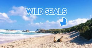Jetabout Holidays - Adelaide wildlife road trip