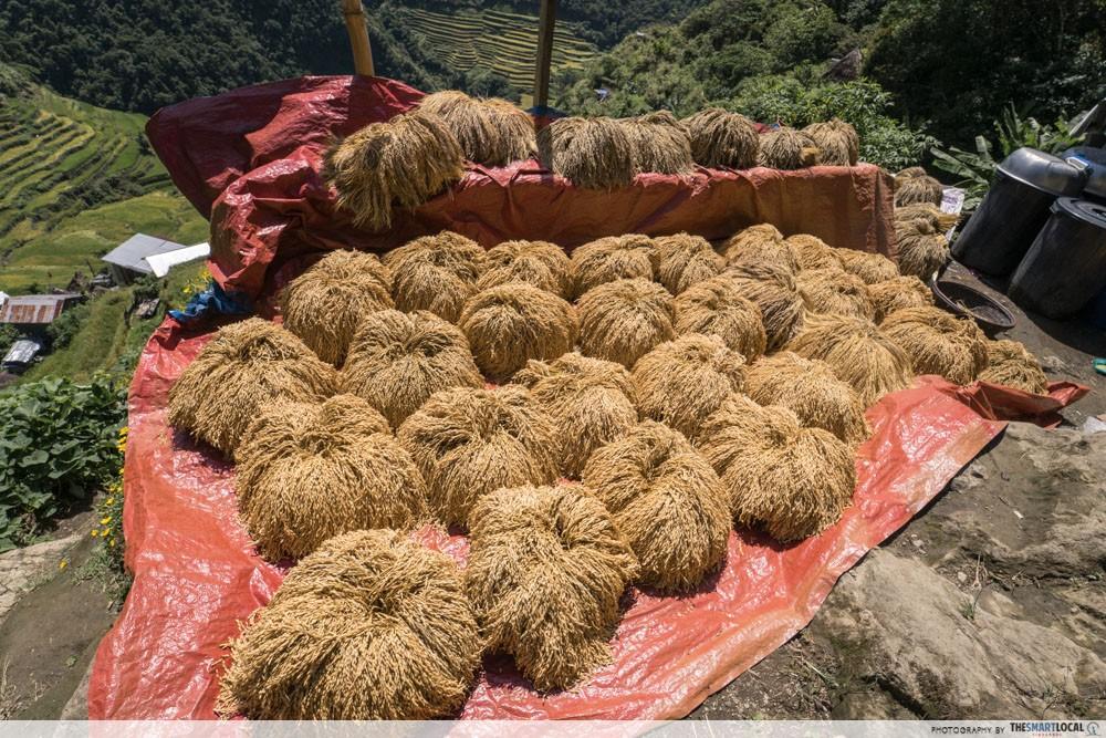 Batad rice