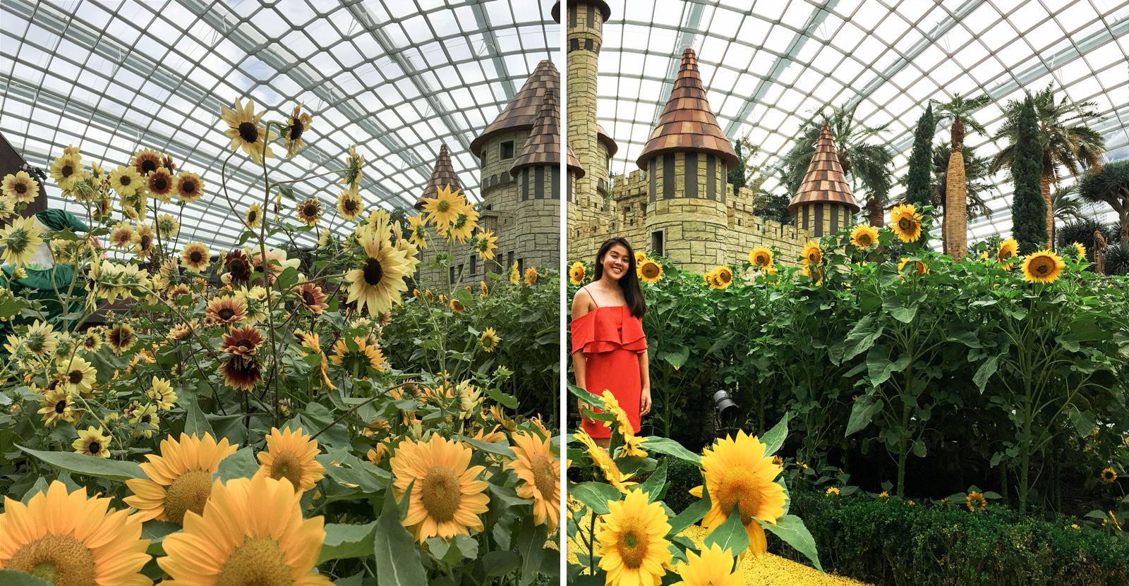 Sunflower surprise ootd using phone GBTB - lightroom colour tones temperature