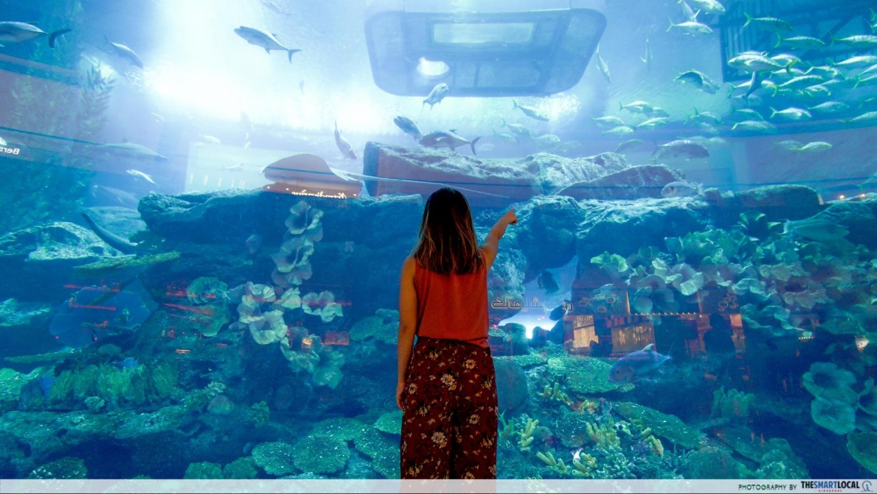 Things to do in Dubai - Dubai Aquarium