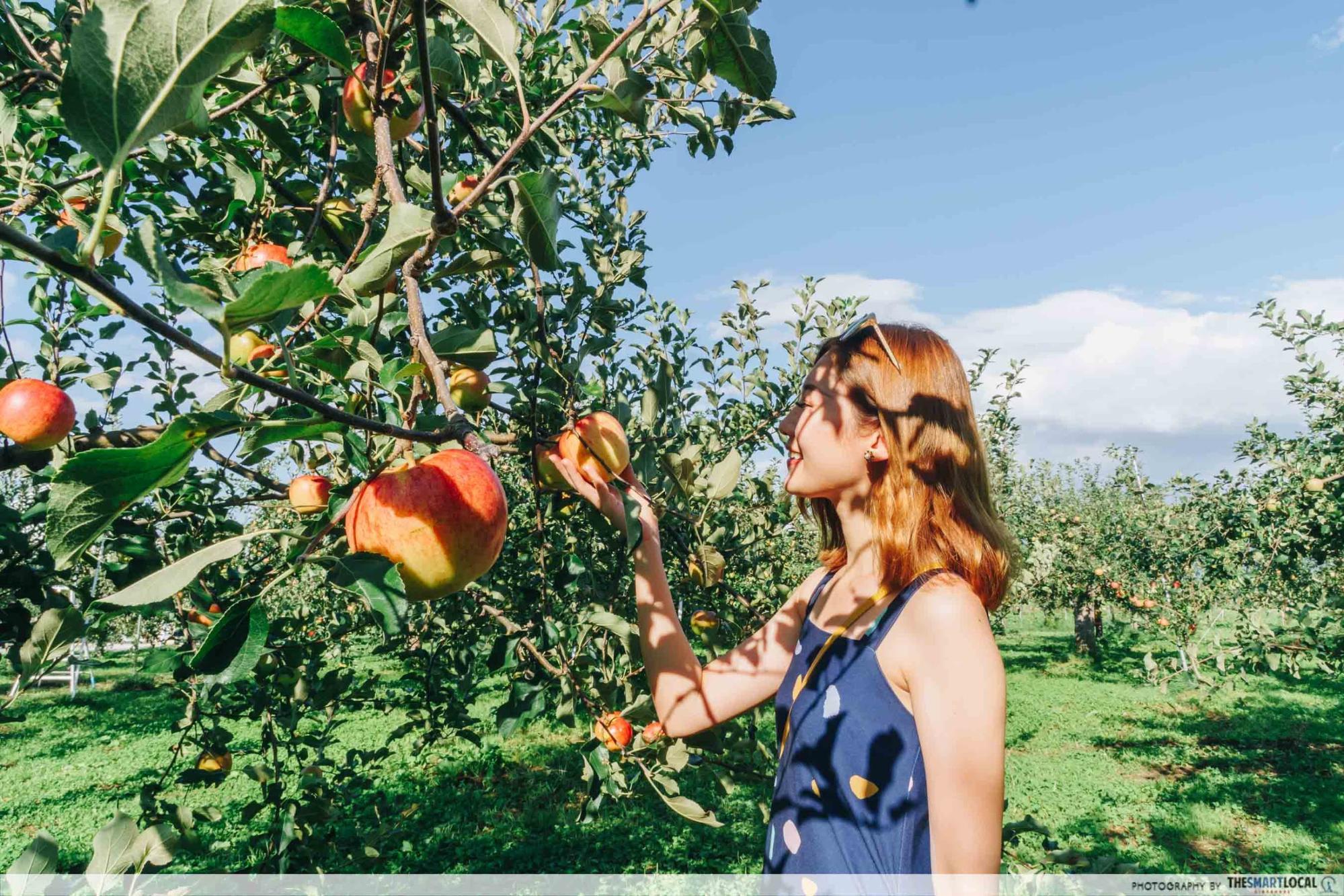 Tohoku Japan - hirosaki park apple picking fujisaki aomori