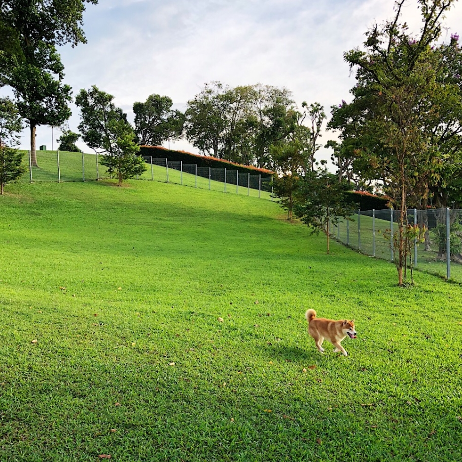 Dog runs Singapore - clementi woods dog run