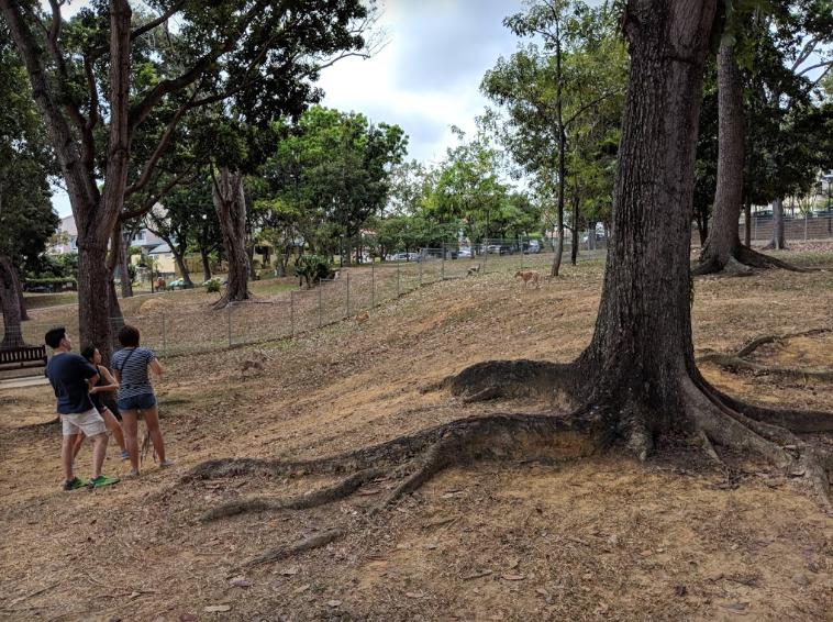 Dog runs Singapore - interim park dog run kembangan