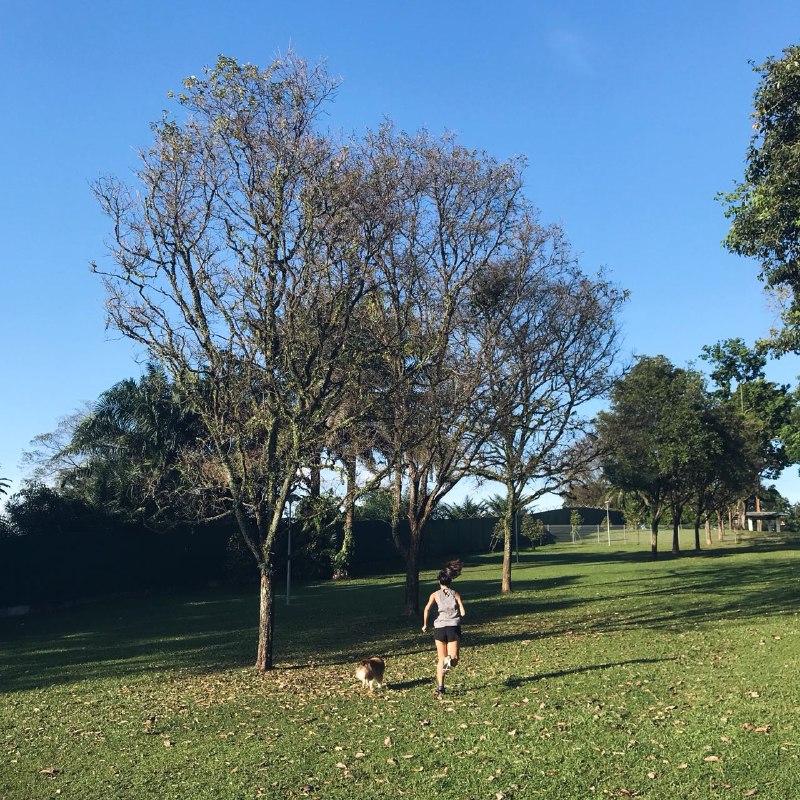 Dog runs Singapore - sembawang park dog run