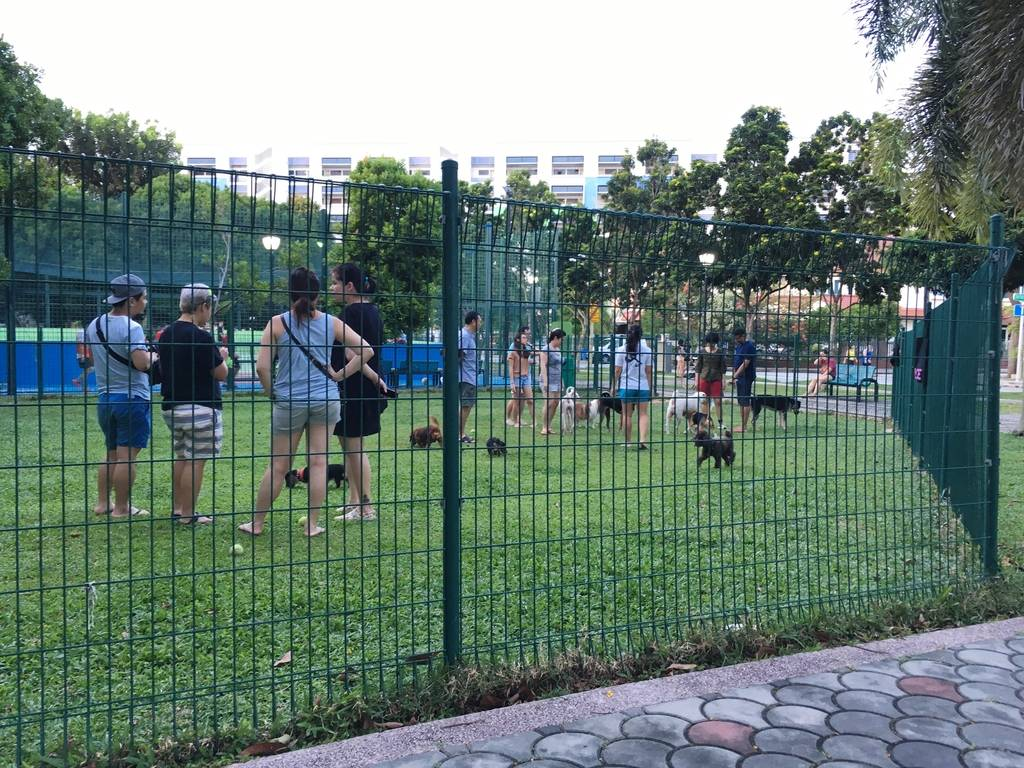 Dog runs Singapore - simpang bedok dog run HDB