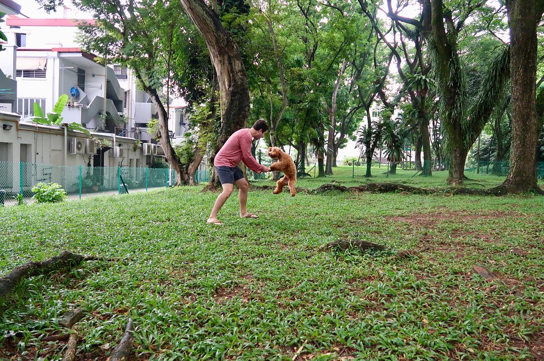 Dog runs Singapore - tiong bahru dog run sit wah road tiong poh road