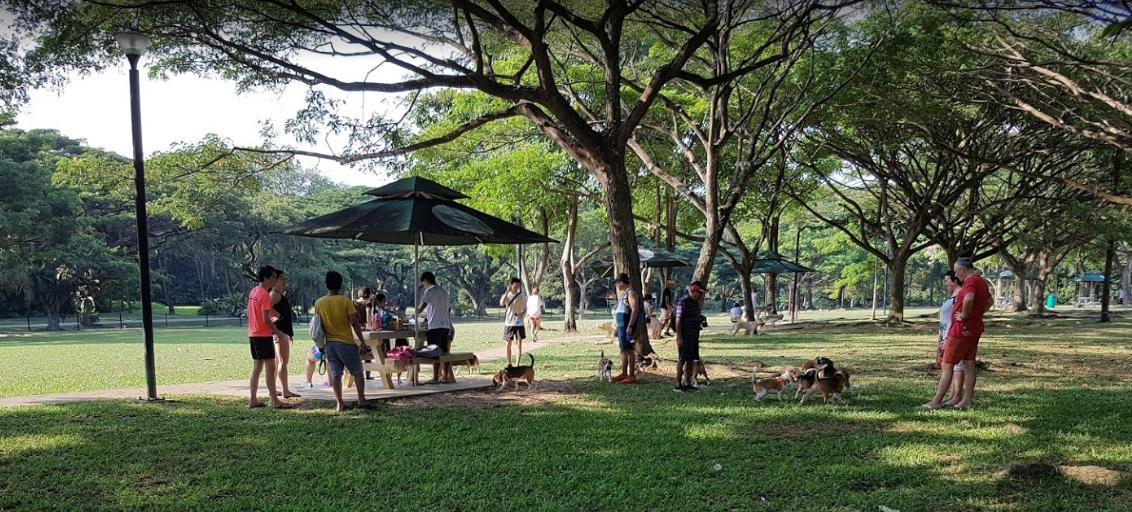 Dog runs Singapore - west coast dog park