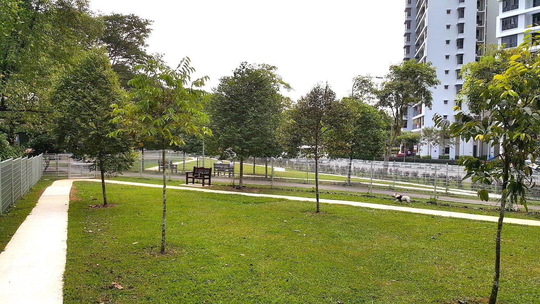 Dog runs Singapore - yishun park dog run