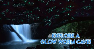 Queensland trips jetabout holidays - glow worm cave cover image
