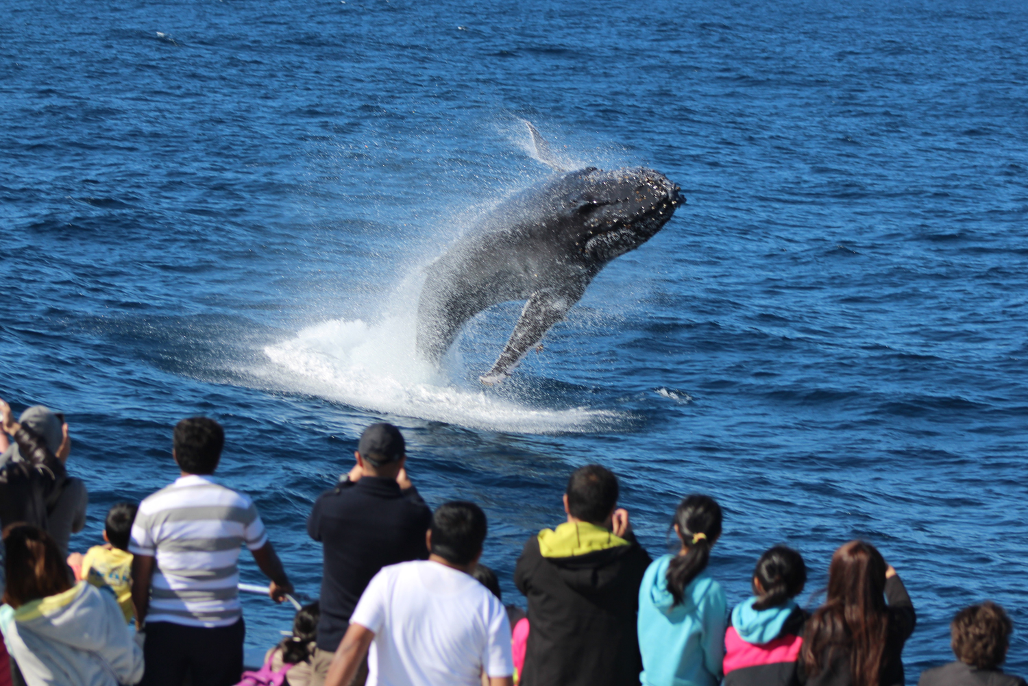 Queensland trips jetabout holidays - whale watching tangalooma