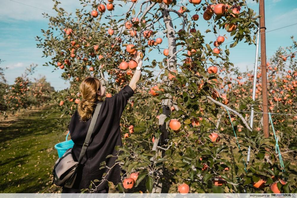 What to do in Azumino, Japan - fruit-picking