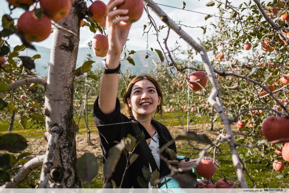 What to eat in Azumino - fruit orchard