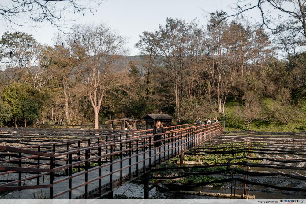 Nagano kamokochi matsumoto guide - daio wasabi farm